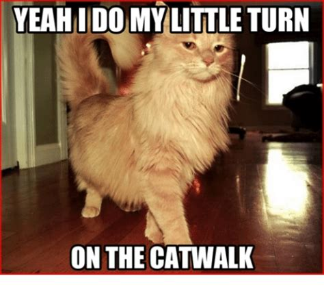 PWBPeeps Evening Open Thread: On The Catwalk and Other Dog