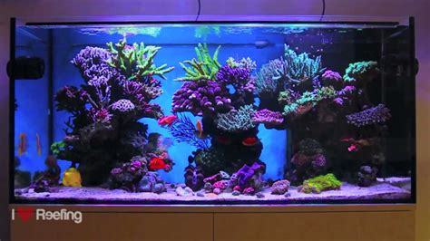 Schwings Reef Tank 500l (130gal) / powered by Ecotech